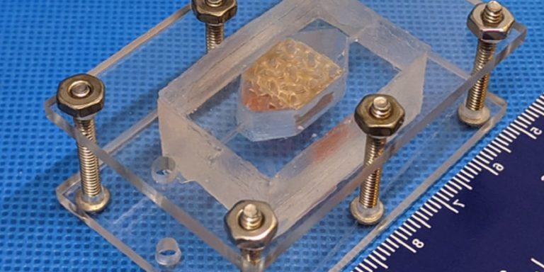 Teams Engineer Complex Human Vascular Tissues – Win Top Prizes in NASA Challenge